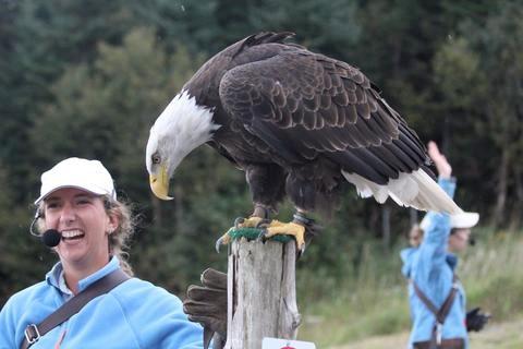 falconry2